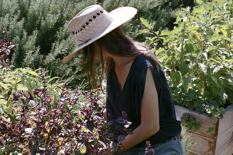 Planting An Herb Garden With Edible Gardens LA