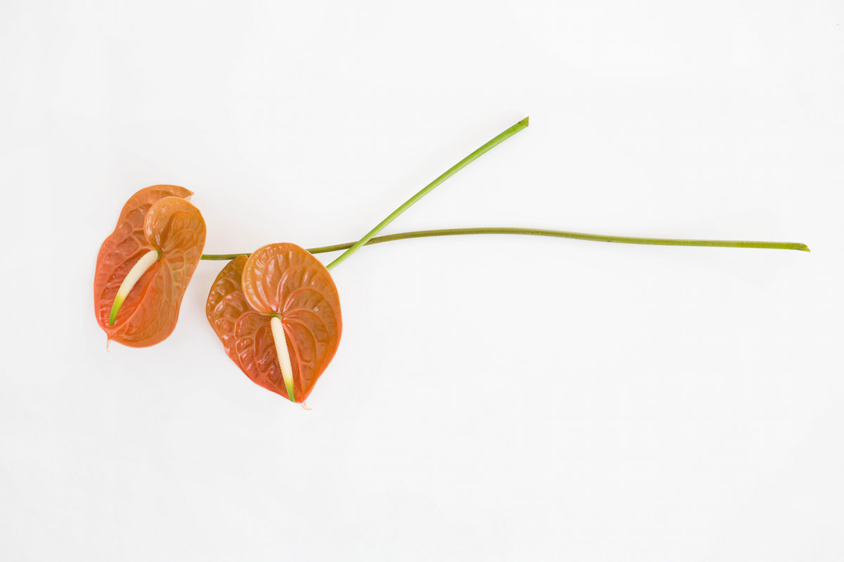 Floral Encyclopedia with Moon Canyon: An Arrangement in Autumn Hues 12