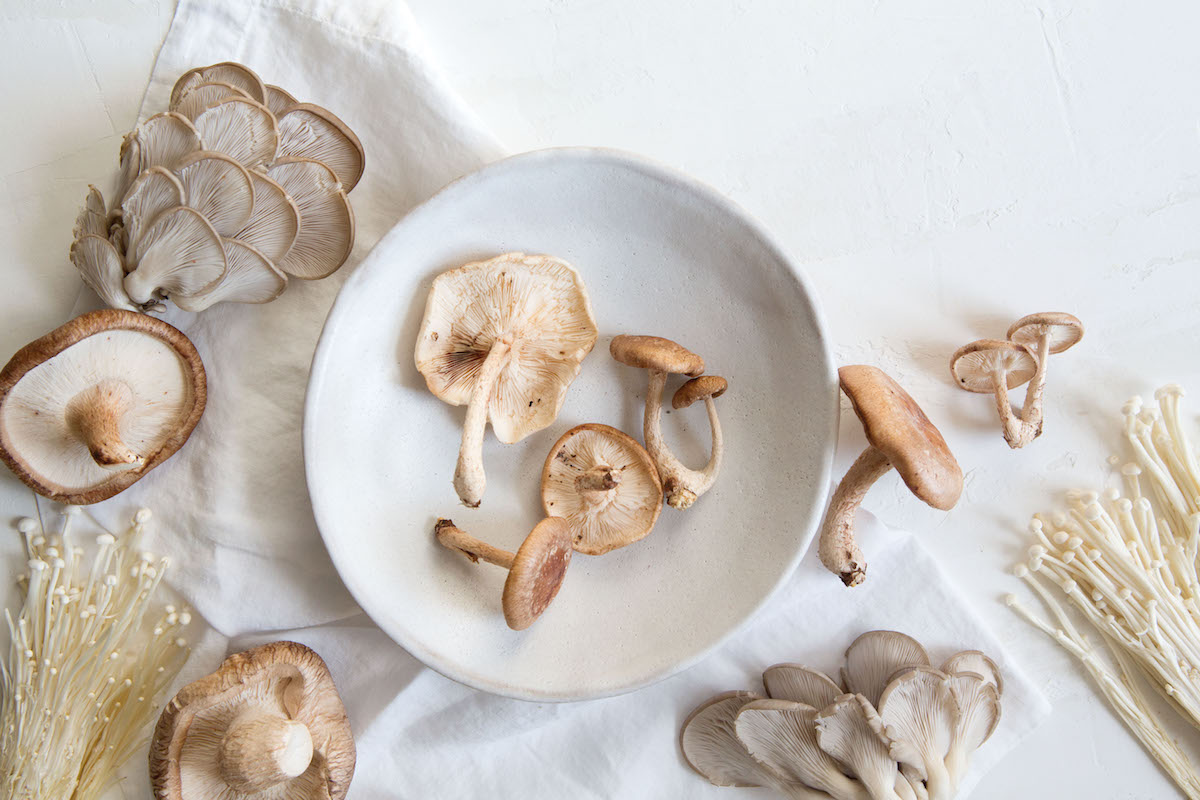 An Introduction to Reishi: The Mushroom Miracle-Worker