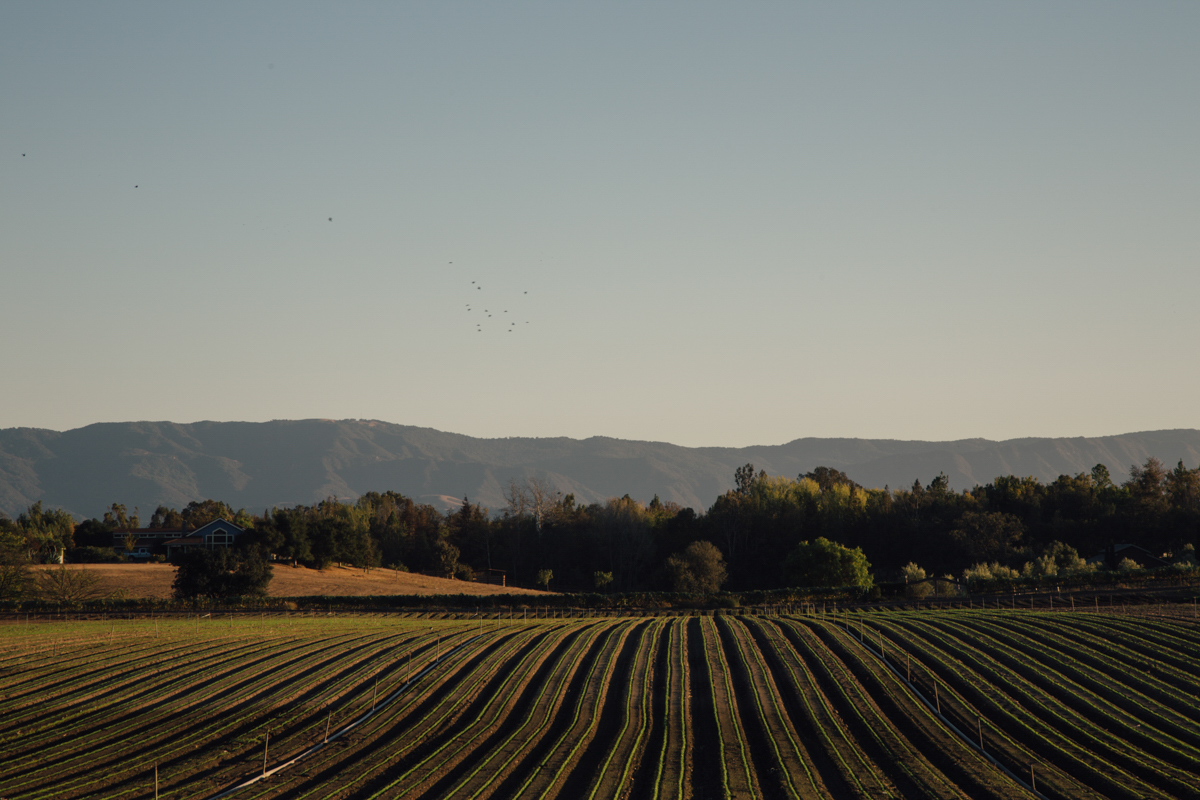 Where to Shop and Eat in the Santa Ynez Valley 16