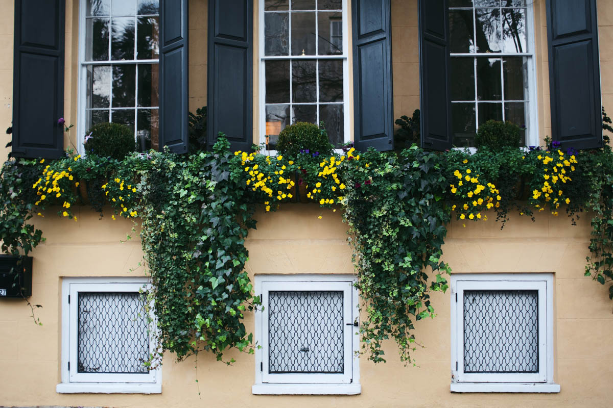 The Charleston, South Carolina City Guide 10