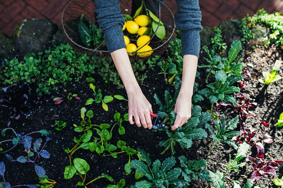Hillary Peterson on the Healing Power of Plants