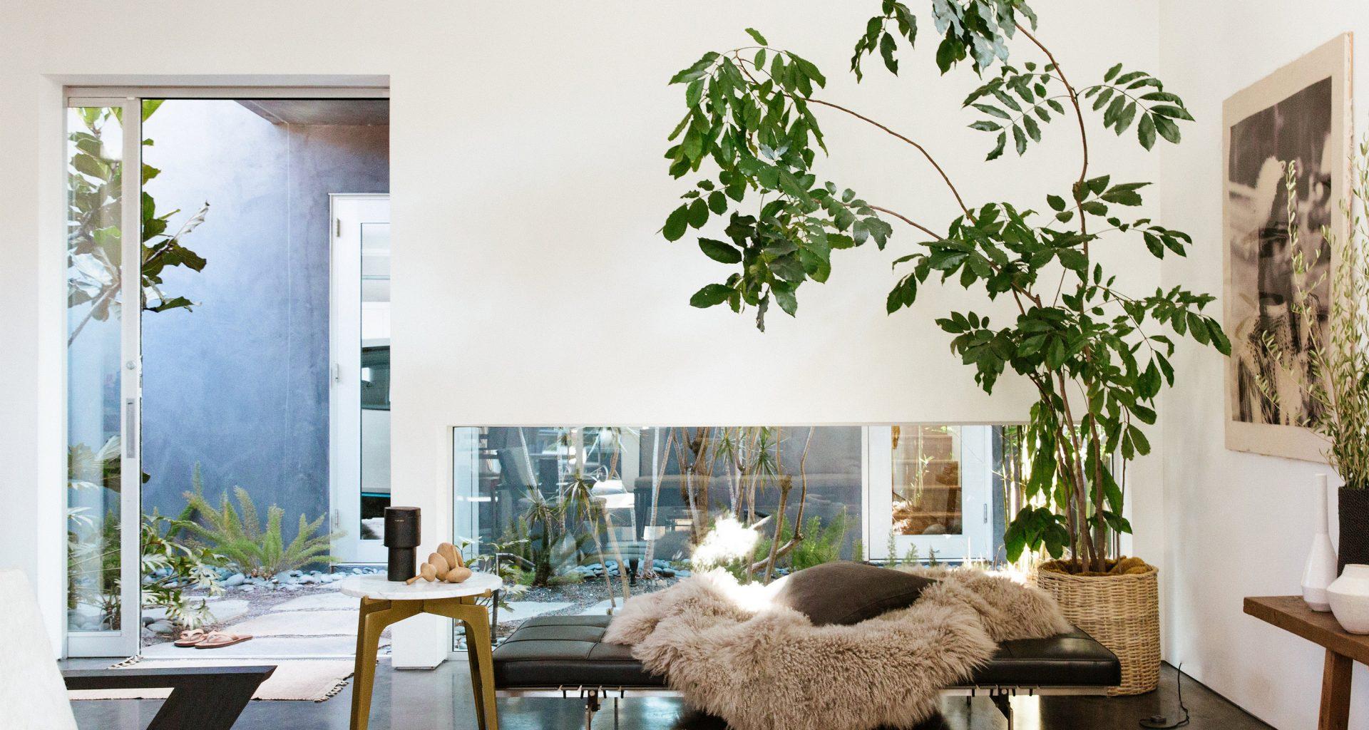 6 Low Maintenance Houseplants You Re Guaranteed To Keep Alive
