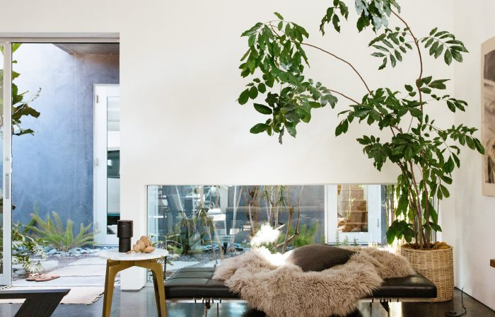 6 Low-Maintenance Houseplants You're Guaranteed to Keep Alive